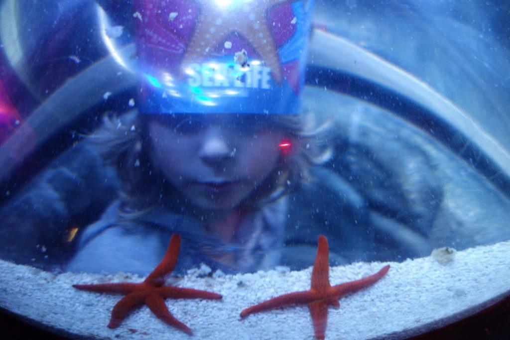 Merten Tähdet -näyttely / Sealife