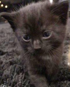 Kissapoika sai nimen!