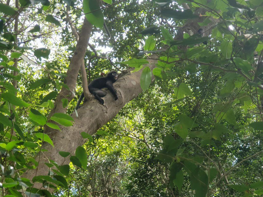 Apina puussa