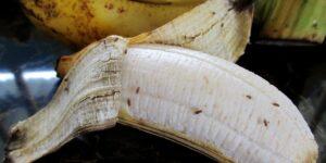 Riesana banaanikärpäset? Näin pääset eroon! -8 vinkkiä