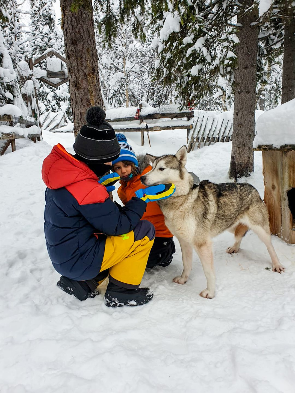 koiravaljakkoajelu